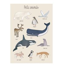 Sebra poster, arctic animals